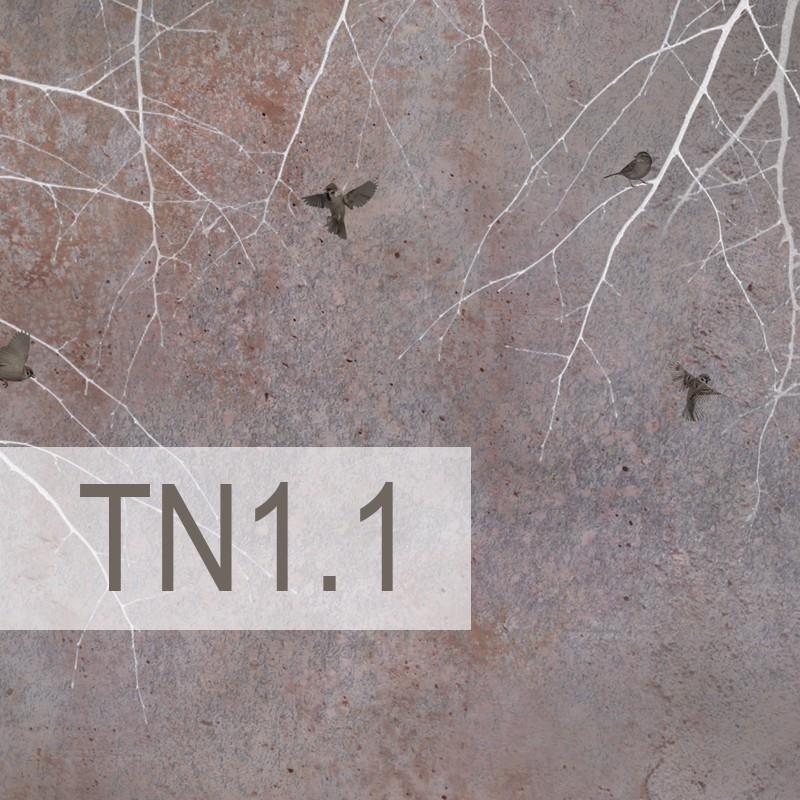 Cedre - TN1.1